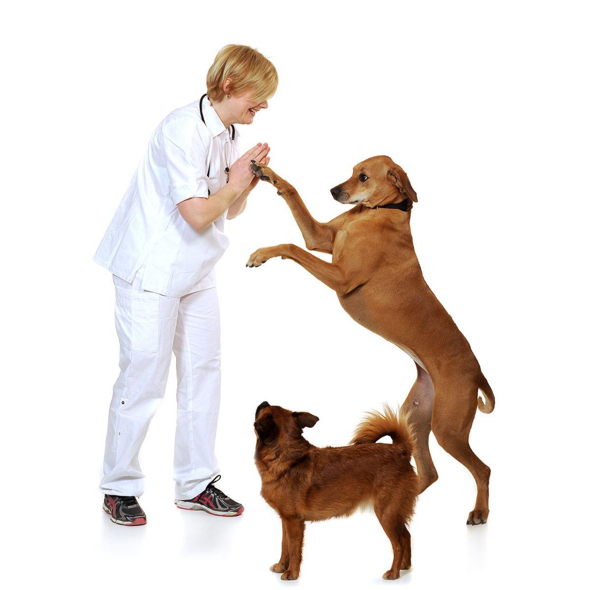 Trygg veterinär i skåne